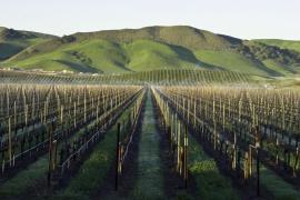 Hawkes Bay Winery